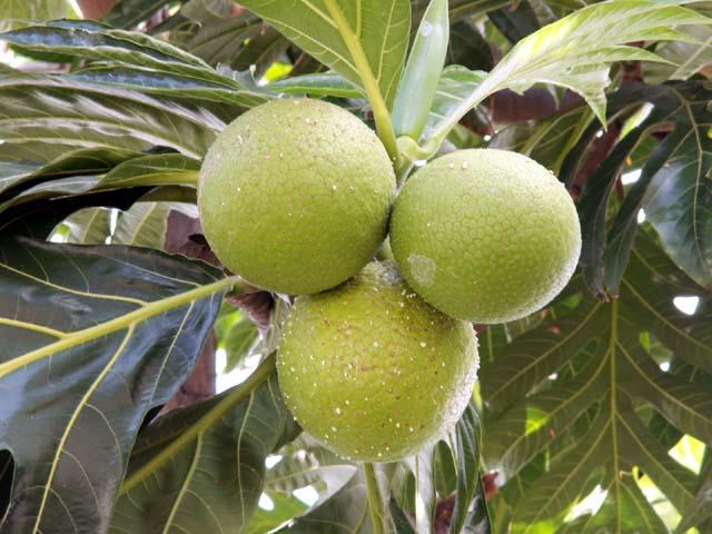 fruitapain