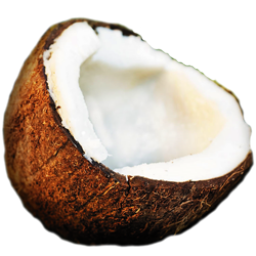 coconut-icon.png